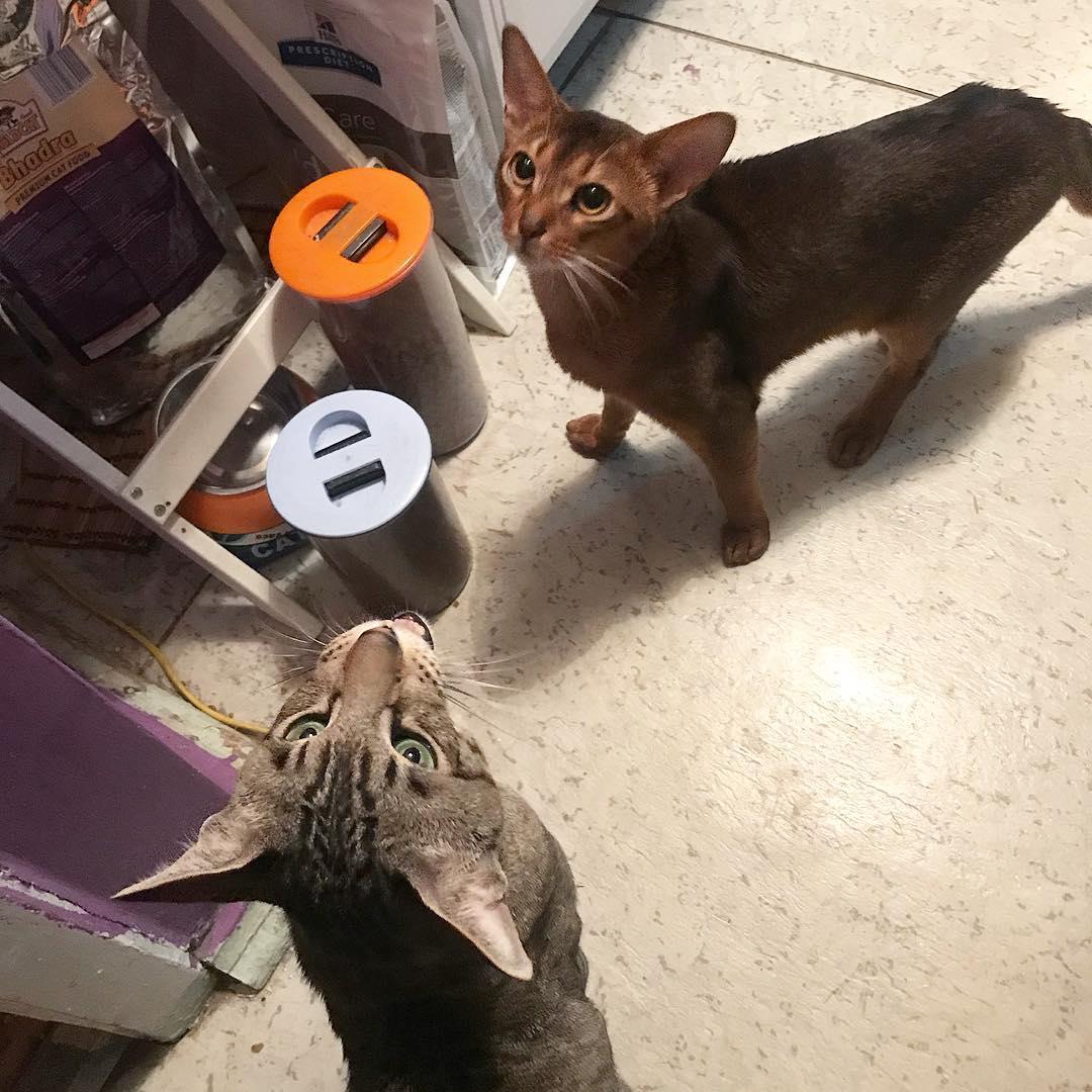 Два кота в одной квартире