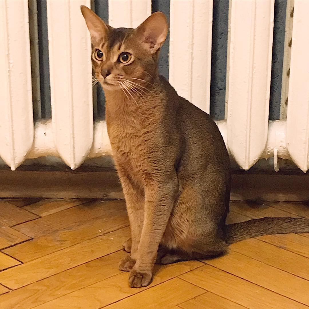 Где оставить кота на время отпуска?