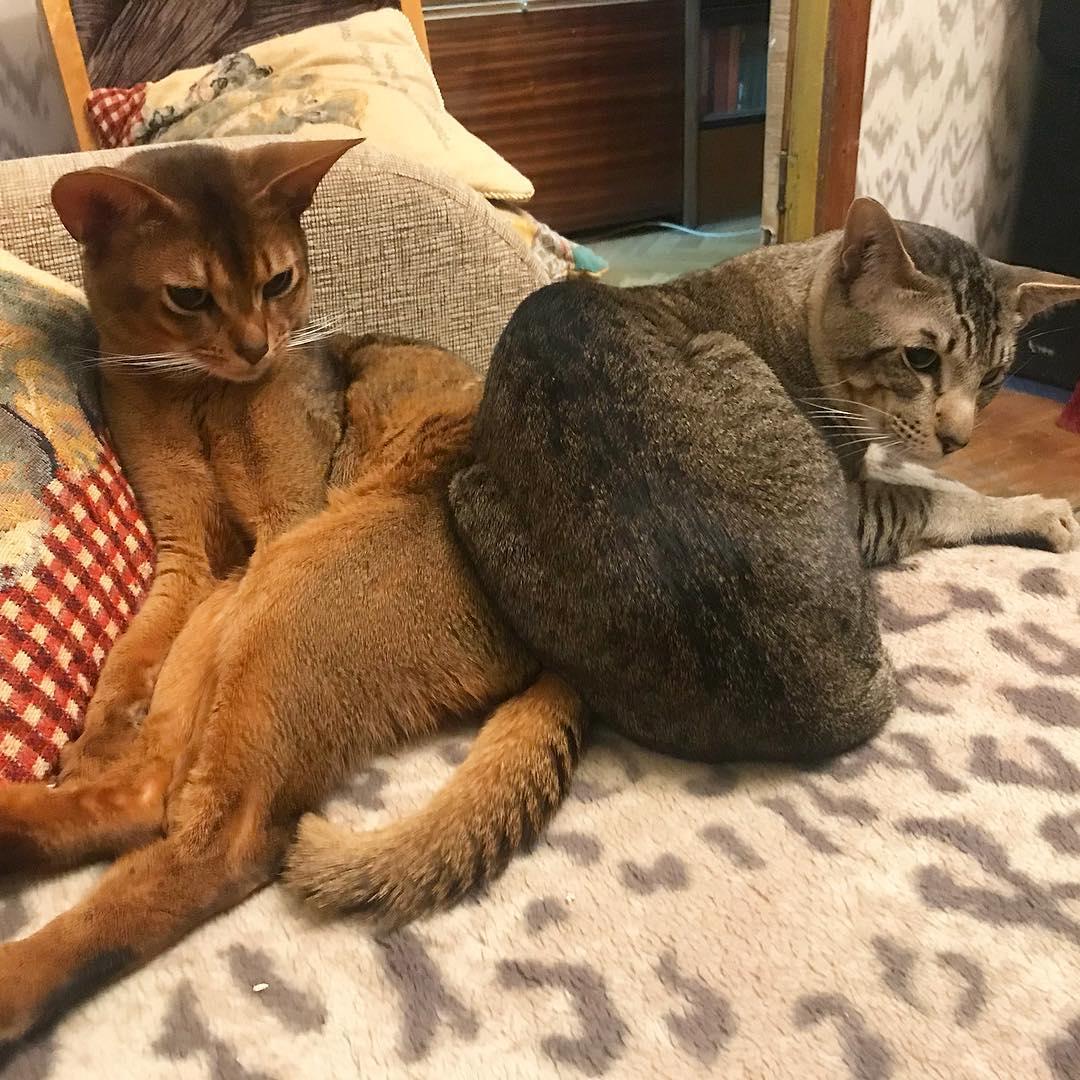 Забирайте котиков из приютов!