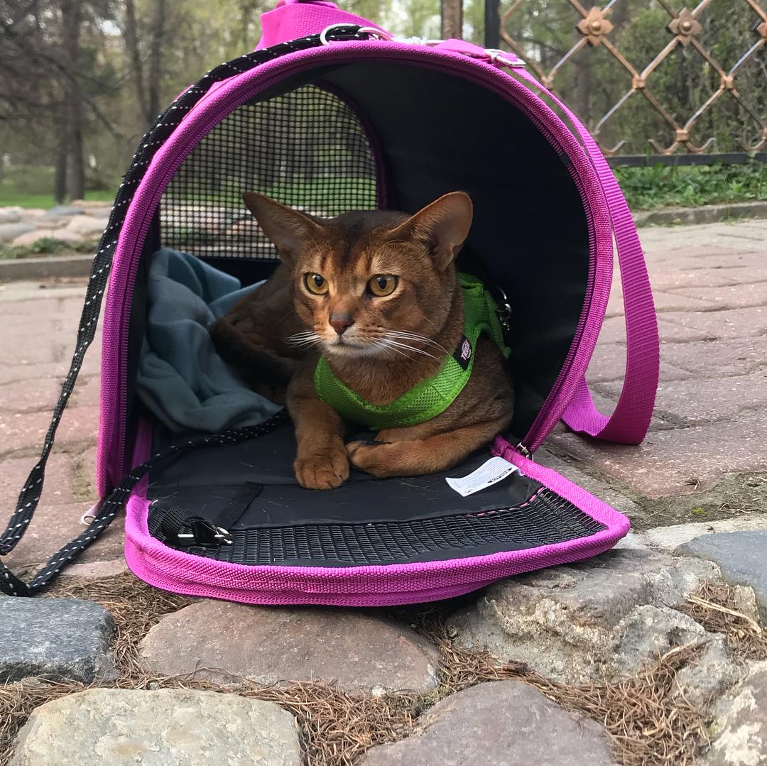 Первая прогулка котика