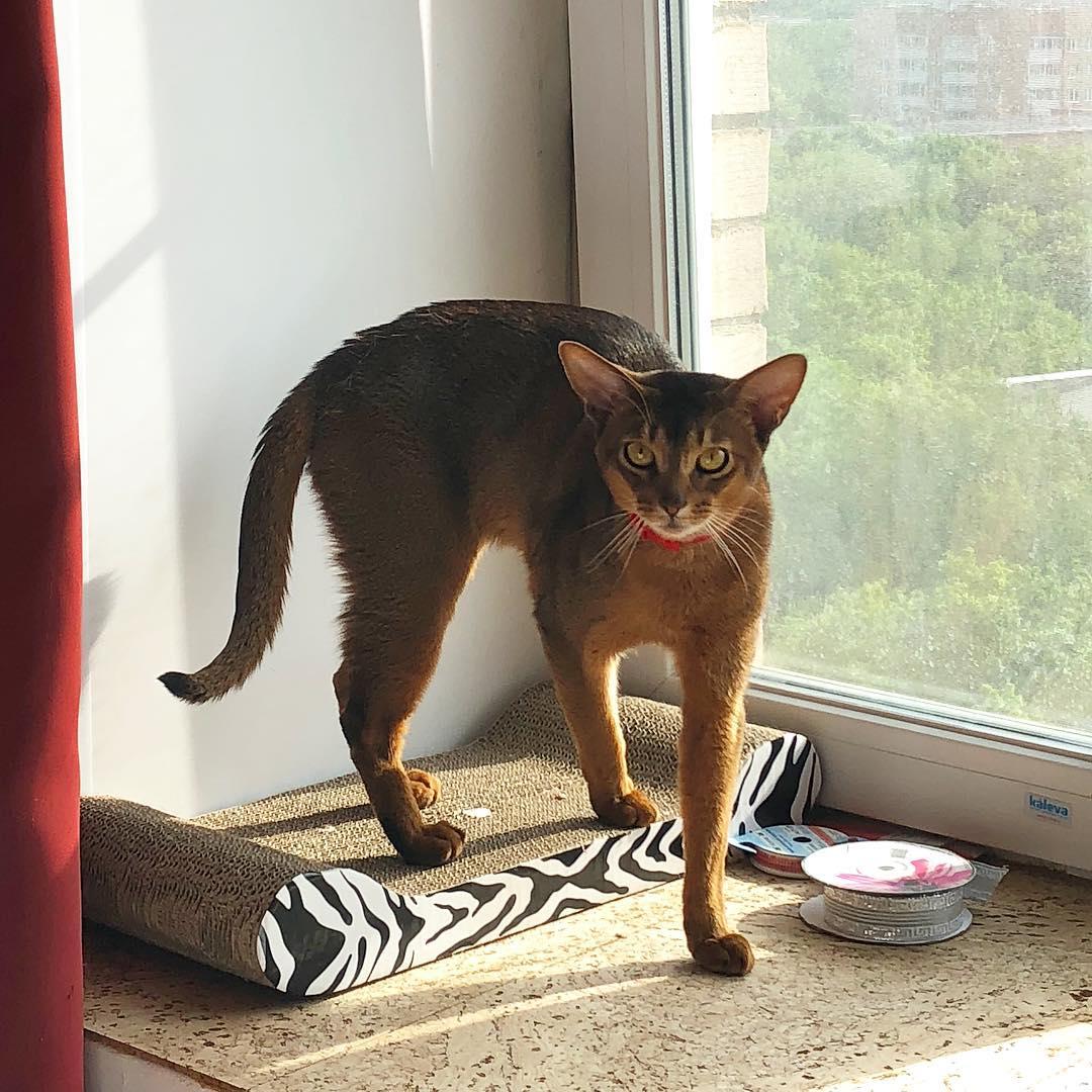 Ненависть между котиками