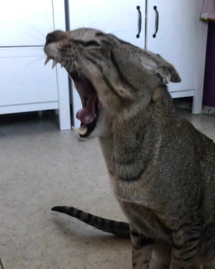 Нападение домашнего кота на человека