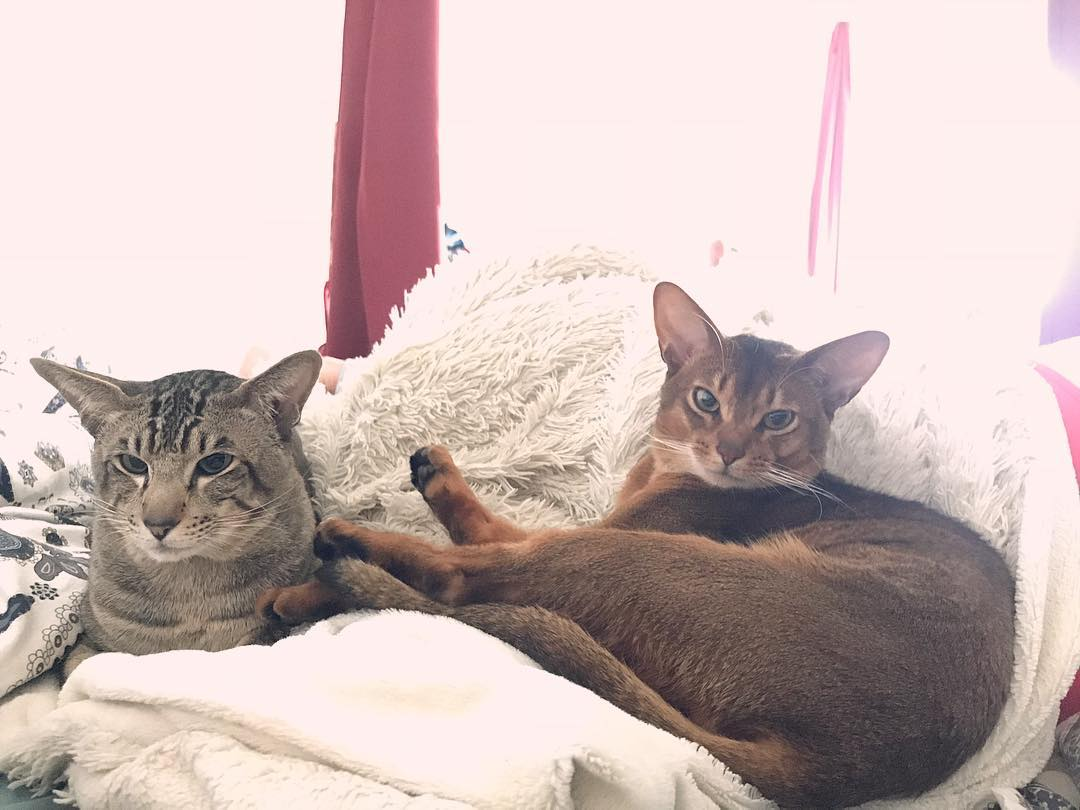Конфликты у котиков: причины, что делать?