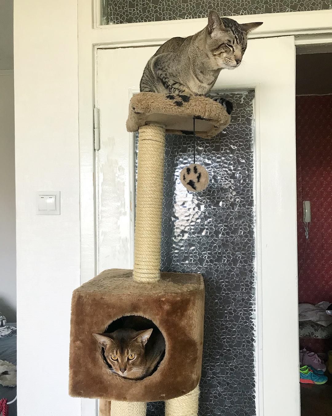 Котовьи игрушки