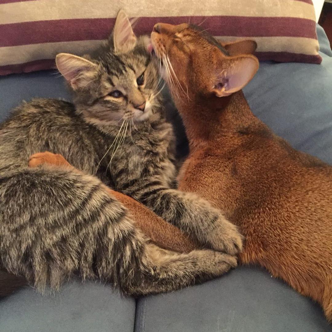 Кот из приюта: как с этим жить?