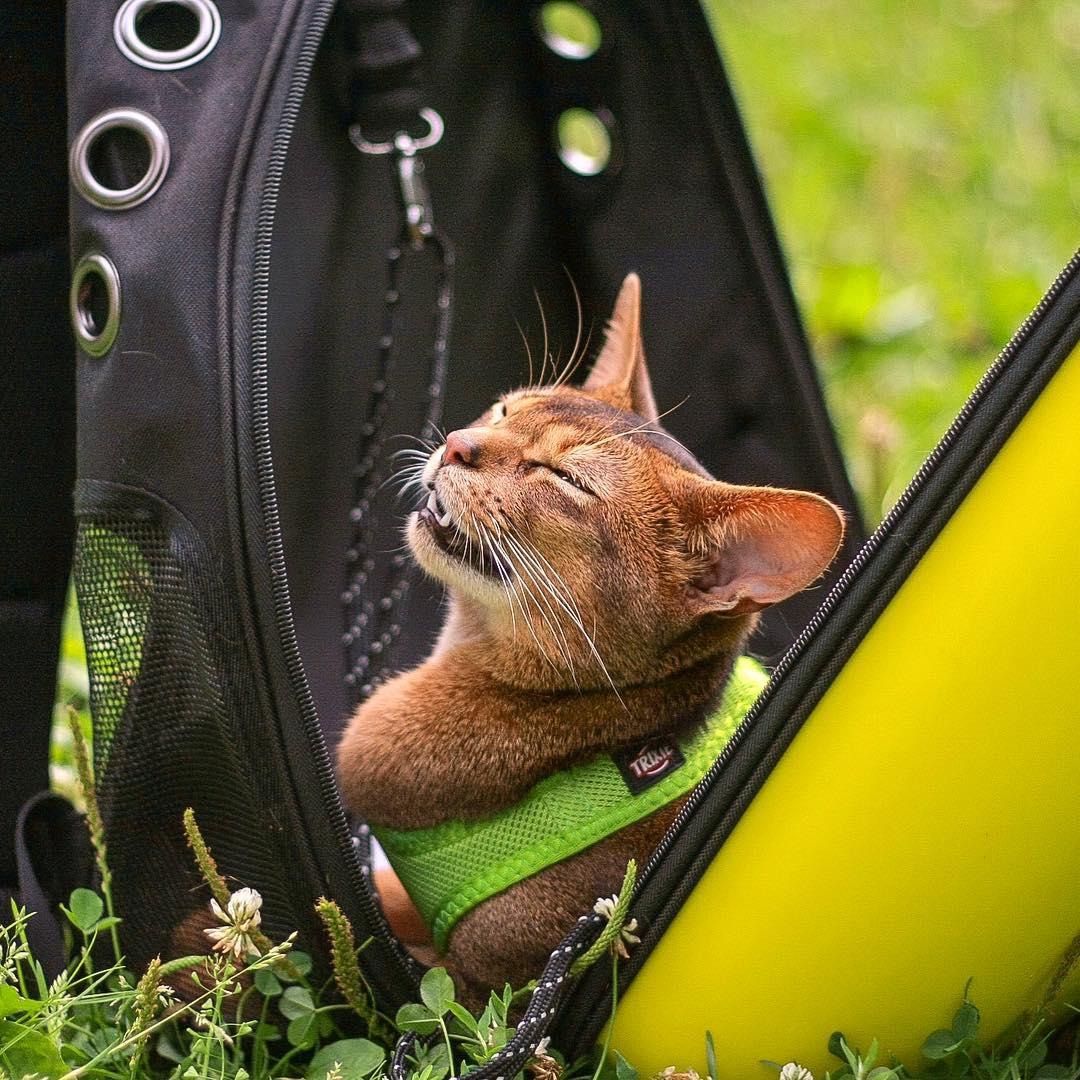 Обзор на рюкзак на кота
