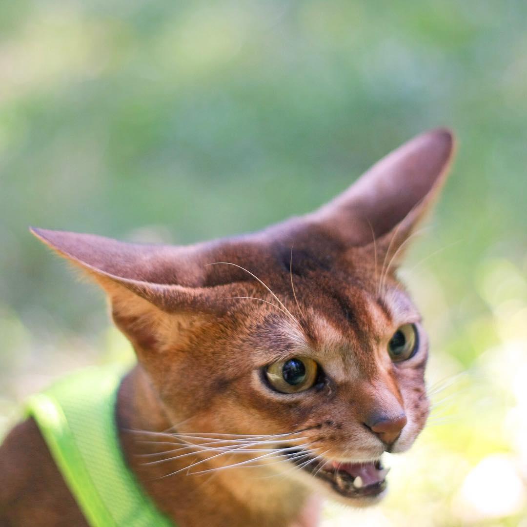 Все проблемы кошек
