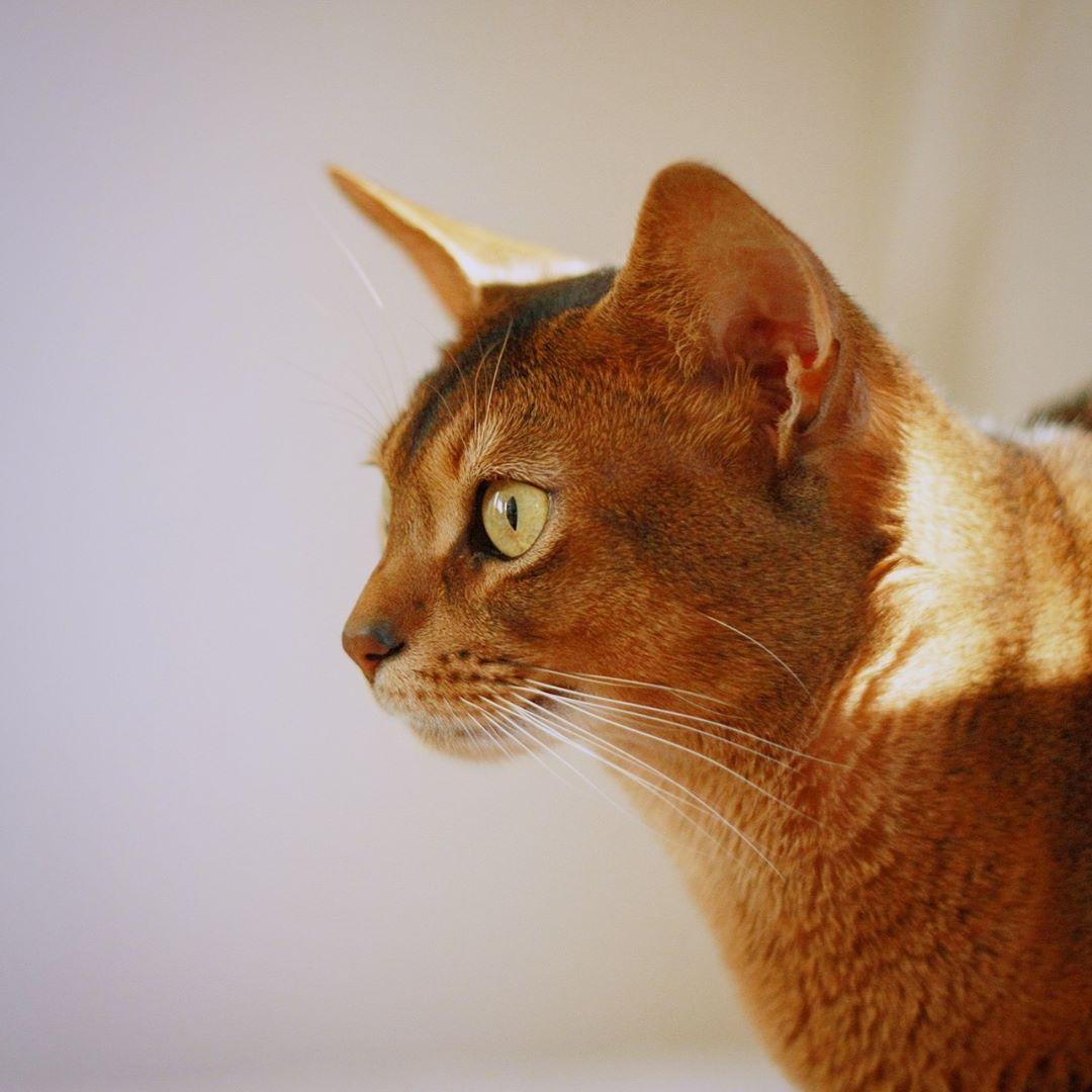 Сколько стоит котик за границей?